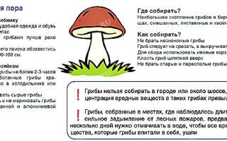 Ядовитые грибы: что нужно знать грибнику