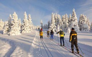 Лыжи для прогулки по лесу