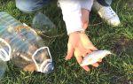 Как сделать ловушку для рыбы
