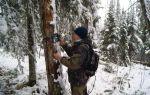 Как выглядит и где используется фотоловушка для охоты?