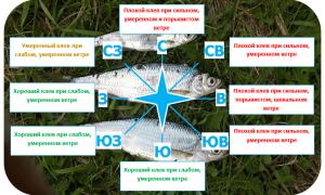 При каком ветре не клюет рыба?